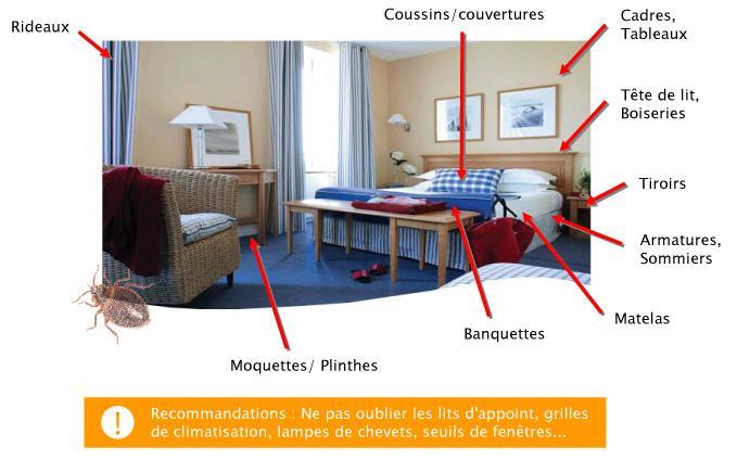 exterminateur punaises de lit gatineau expert en extermination gatineau. Black Bedroom Furniture Sets. Home Design Ideas